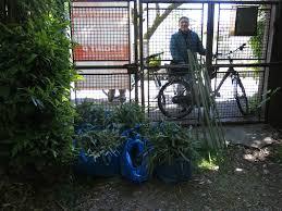 tonnelle en bambou plan bambou le concombre masqué jardinier