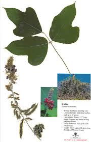native alternatives to invasive plants top 10 invasives