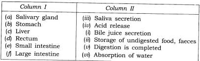 ncert solutions class 7 science chapter 2 nutrition in animals