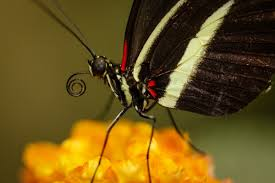 from which leg does a butterfly eat the front or back one quora