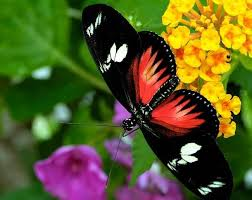 55 colorful butterfly hd free images wallpapers