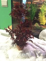 help with aquarium plants and decorations placements 226920