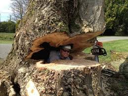 about us precision tree service snohomish wa