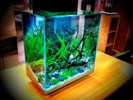 Aquascape Designs For Aquariums 46 Best Aquascape Fluval Edge 46 Images On Pinterest Aquarium