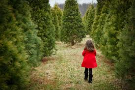 cutting down your own christmas tree in the pittsburgh area
