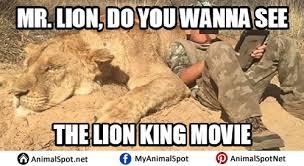 Lion King Meme - lion king memes different types of funny animal memes pinterest
