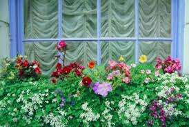 What To Plant In Window Flower Boxes - the best flower annuals for a window box home guides sf gate