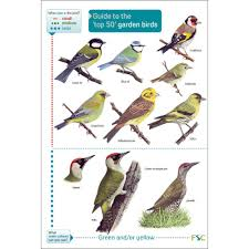 bird identification chart socialmediaworks co