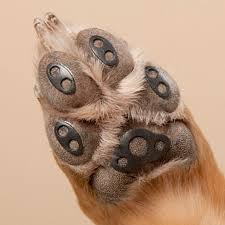dog and hardwood floors does your dog slip and slide on your hardwood or tile floors help