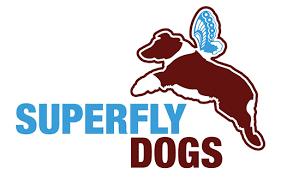 risk n hope australian shepherds cerise superfly dogs u2013 australian shepherds in british columbia