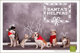 five acres animal shelter annual card studio