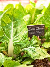 eat what you sow how to start a vegetable garden