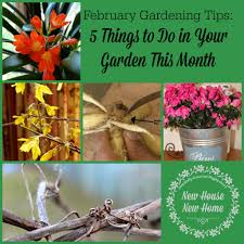 february gardening tips 5 things to do in garden gardens