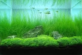 japanese aquascape image result for japanese aquascape inspiration station pinterest