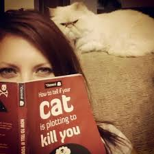 28 signs that your cat is plotting to kill you blazepress