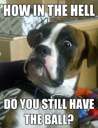 Funny Meme Dog - funny boxer dog quotes funny photos funny meme meme funny
