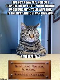 Lawyer Cat Meme - half your stuff is gonna be gone imgflip