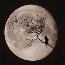 via cat and the moon jpg jpeg image 500x500 pixels s soup