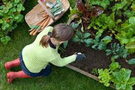 colorado garden to do list keep garden tools clean and cared for