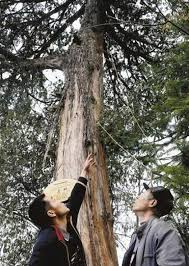 trees once believed to be extinct comeback
