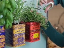 10 herbs for gardening newbies hgtv u0027s decorating u0026 design blog