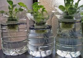 cara membuat cairan hidroponik cara menanam tanaman di botol bekas urbanina
