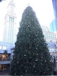 world u0027s largest u0026 tallest christmas trees delivery u0026 setup