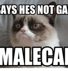 25 Of The Best Grumpy - 25 best memes about snowshoe cat grumpy snowshoe cat grumpy memes