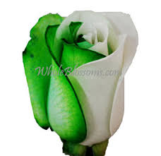 green roses buy dyed green at wholesale price