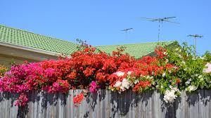 fence tag wallpapers page 2 trees green washington skagit plants