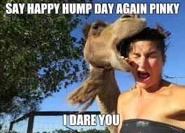 Happy Hump Day Memes - hump day memes imgflip