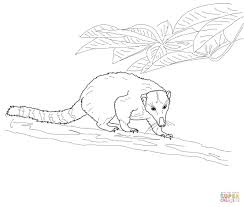 coati coloring pages free coloring pages