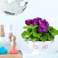 house plants that don t need light house plant that needs very little light home furniture design