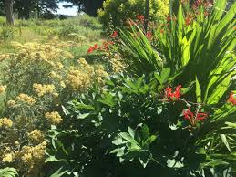earth tones native plant nursery bedrock gardens blog bedrock gardens