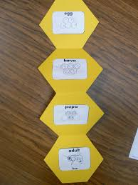 here is our honeycomb hexagon bee shape book after reading our
