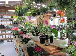 native plant nursery perth 11 of the best places to buy plants in auckland auckland the