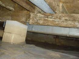 Getting Rid Of Mold In Basement by Mold Prevention In Greensboro Winston Salem High Point