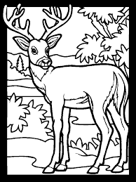epic deer coloring 76 free colouring pages deer