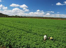 organic weed control soil systems australia soil systems australia