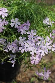 spring plant sale plants u0026 vendors
