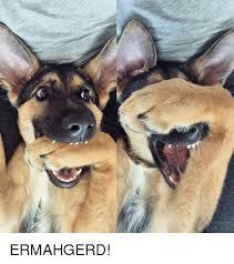Ermahgerd Animal Memes - ermahgerd ermahgerd meme on me me