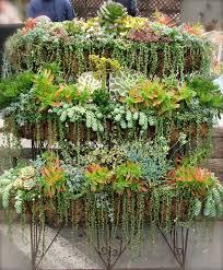 garden beautiful succulents in hanging pots original ornamental