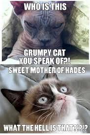 Grumpy Cat Photo 1 Best - the best of grumpy cat