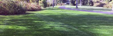 Superior Lawn And Landscape by Superior Lawn Inc U2013 Quality Keeps Us A Cut Above The Rest