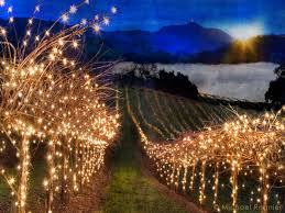 christmas lights net style christmas lights california vineyard style imgur