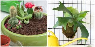 20 best indoor plants good inside plants for small space gardening
