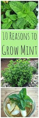 best 20 herb planters ideas on pinterest growing herbs 24 best urban farming ideas images on pinterest gardening urban