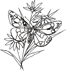 butterfly to color 1664 950 1266 free coloring kids area