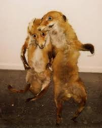 Taxidermy Fox Meme - 29 hilarous taxidermy fails taxidermy bad taxidermy and hilarious