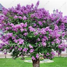 Tree With Purple Flowers Compare Prices On Purple Flower Trees Online Shopping Buy Low